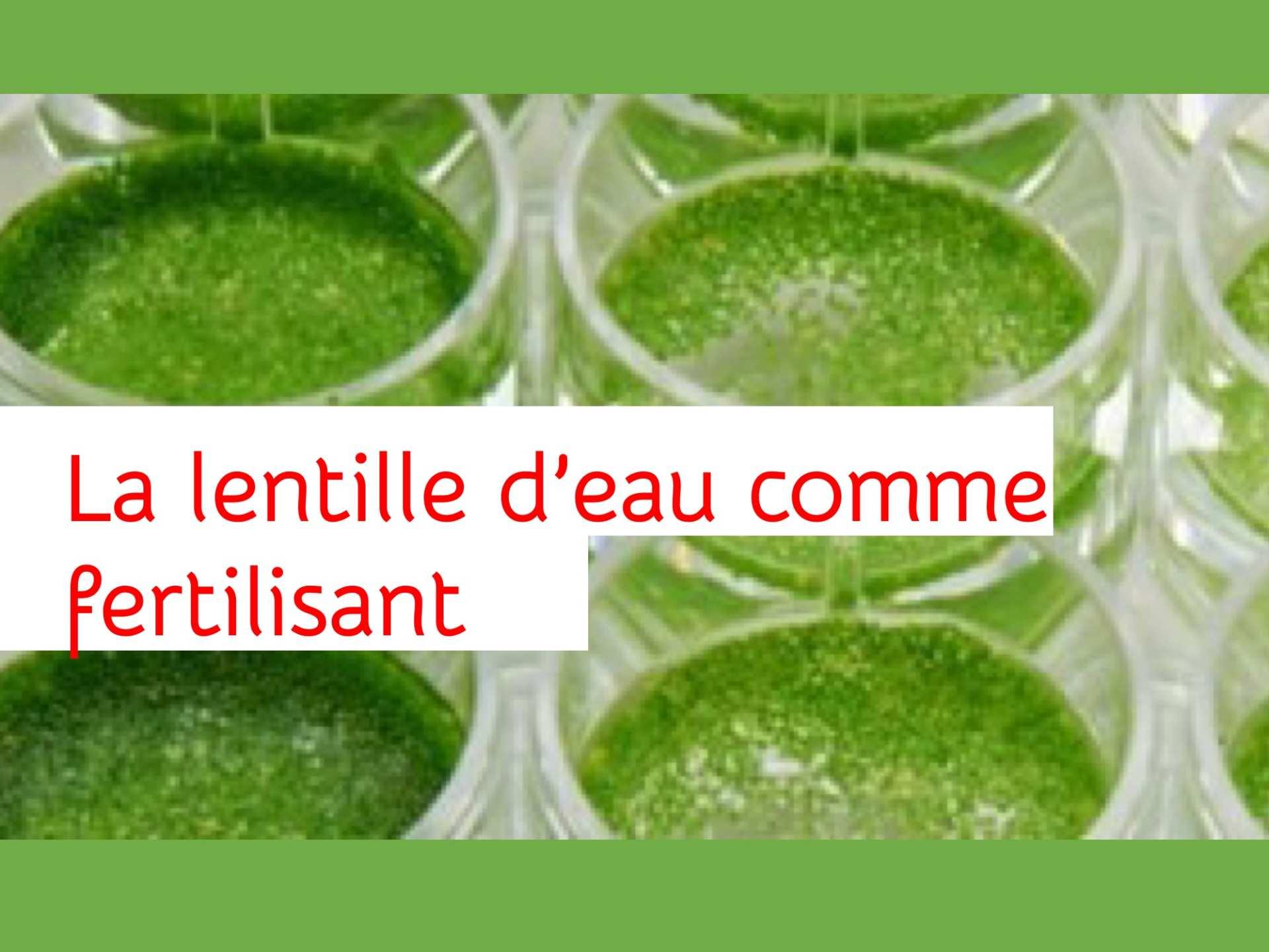 Landestini Incubateur Lentille deau