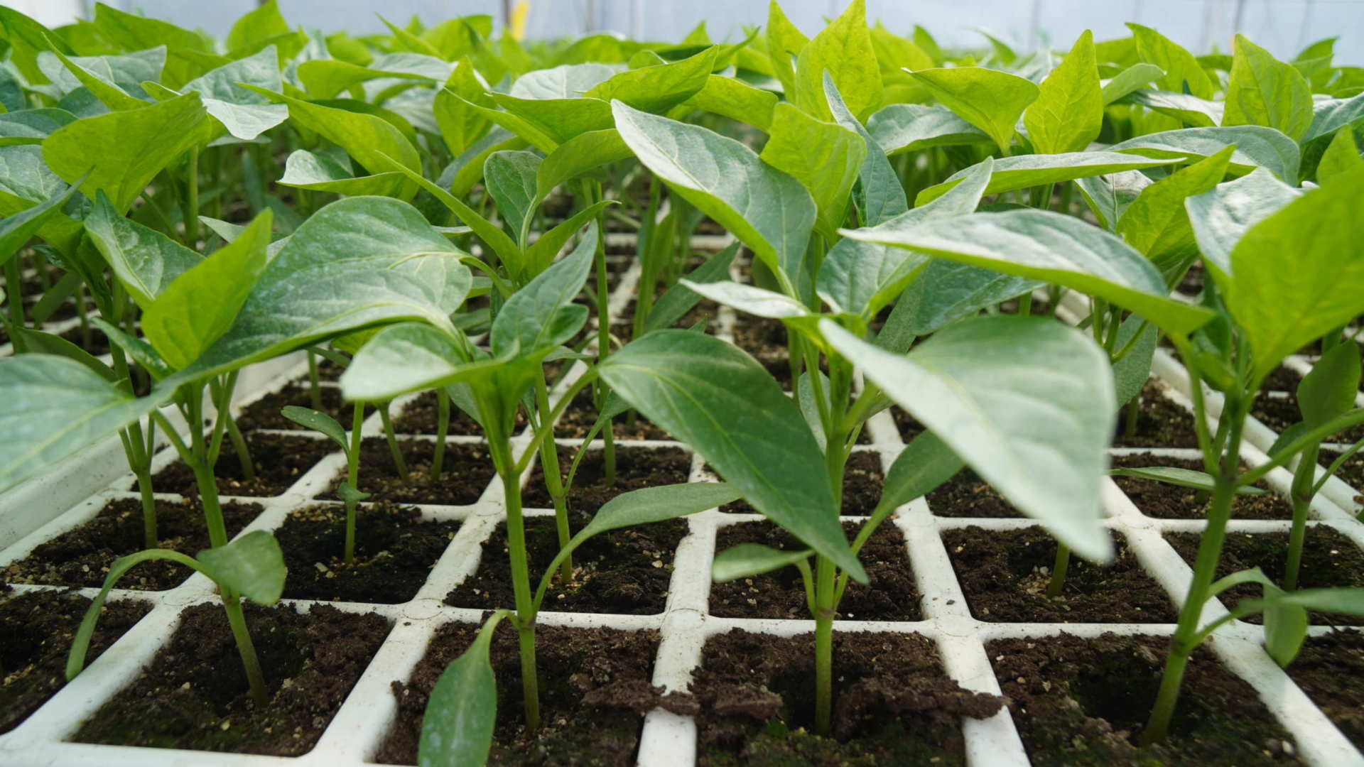 Plants offerts par TerrAttitude